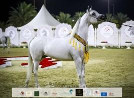 صور مقتطفة من اليوم الختامي من بطولة الشارقة ٢٠٢١ الدولية للجواد العربي