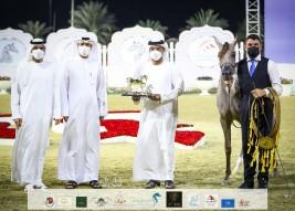 خيول مربط عجمان تتألق بذهبية وبرونزيتان في ختام مهرجان الشارقة 2021