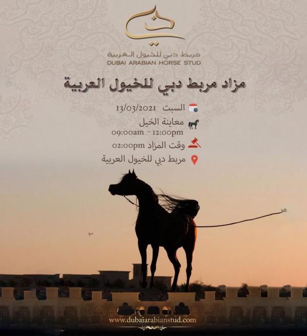 مزاد مربط دبي للخيول العربية 2021 يقام يوم السبت المقبل بخياري الحضور والأونلاين..!