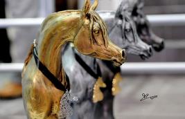 خاص: بطولة الشارقة الدولية ٢٠١٢ للخيل العربية الأصيلة – النتائج المصورة