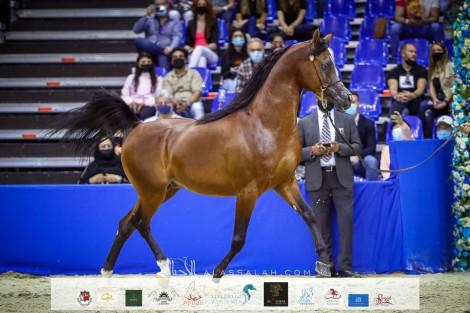 صور مقتطفة من اليوم الثاني من بطولة دبي ٢٠٢١ الدولية للجواد العربي