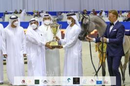 ذهبية وبرونزيتان لمربط عجمان في بطولة دبي الدولية للجواد العربي 2021
