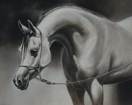 تربية الخيول هواية رائعة تحتاج إلى المساحة والوقت والنقود
