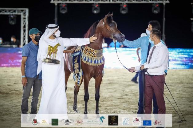 اليحيائي يحلق بذهبيتين في منافسات بطولة الظفرة 2021 لجمال الخيول العربية