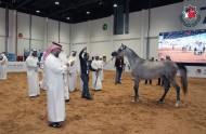 """جمعية الإمارات للخيول العربية تنظم دورات للتحكيم والعارضين في """" أبوظبي للصيد والفروسية"""""""