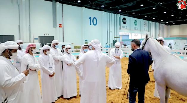 """جمعية الإمارات للخيول العربية تشارك في """"أبوظبي للصيد والفروسية"""""""
