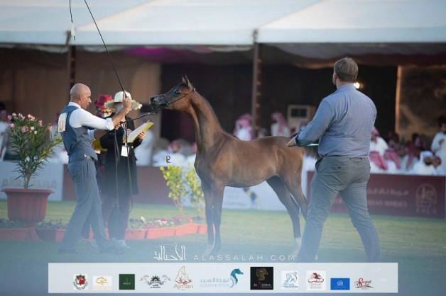 صور مقتطفة من بطولة الإنتاج المحلي ٢٠٢١ لجمال الخيل العربية بالرياض