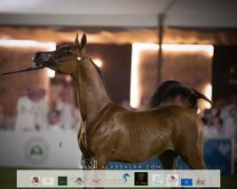 صور مقتطفة من اليوم الثاني من بطولة الإنتاج المحلي ٢٠٢١ لجمال الخيل العربية بالرياض