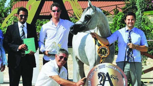 """""""شيرين"""" تحقق ذهبية بطولة إيطاليا الدولية لجمال الخيل للمهرات"""