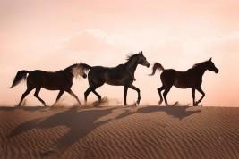 الاتحاد يسعى لرفع الحظر عن تصدير الخيول المصرية للخارج