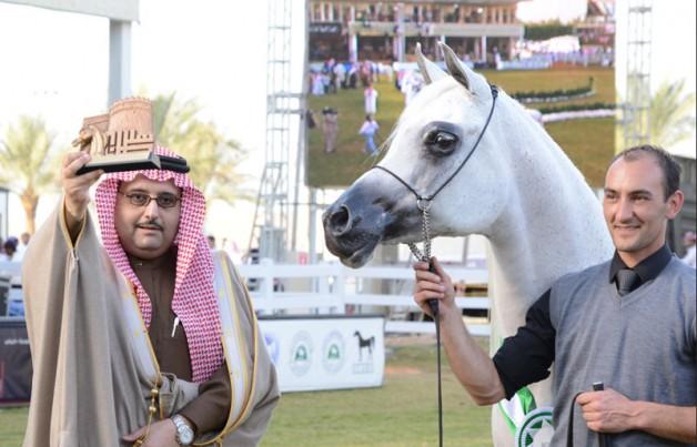 مرابط عذبة وعجمان والشقب تتأهل إلى نهائيات مهرجان الأمير سلطان للجواد العربي