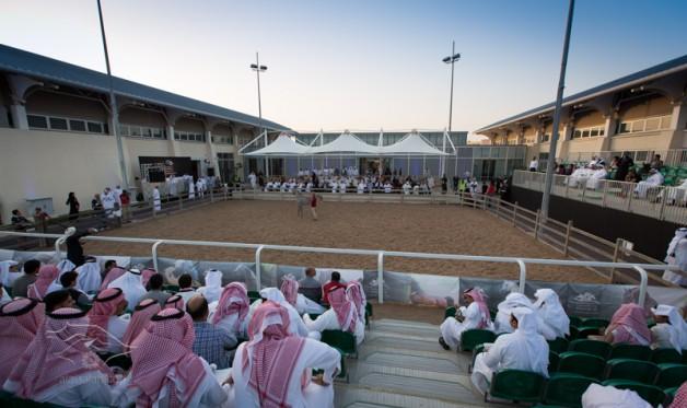 نجاح كبير لمزاد الشقب الرابع بحصيلة 4 ملايين ريال من 40 رأس من الخيل العربية الأصيلة