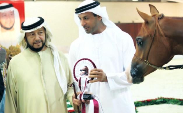 مربط دبي يؤكد مكانته بين منتجي الخيول العربية الأصيلة في بوذيب