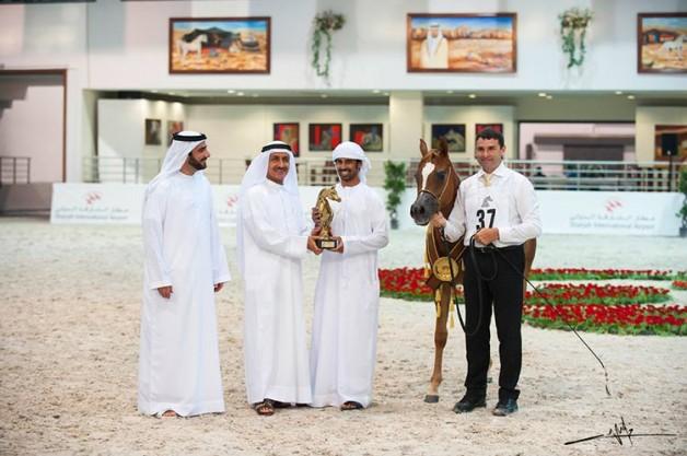 خيول الإمارات تحلق بألقاب 4 بطولات في الشارقة