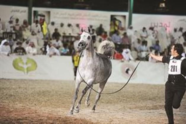 «نوف اللآلئ» تفوز بالمركز الأول في جمال الخيل العربية