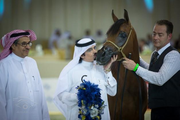 صور متفرقة من اليوم الأول لبطولة دبي الدولية للجواد العربي ٢٠١٣