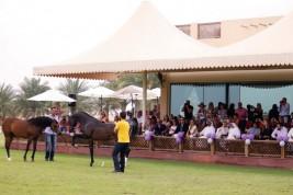 مربط دبي ينظم يوماً مفتوحاً لضيوف بطولة الجواد العربي