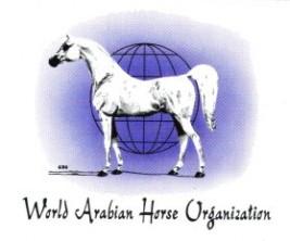 """نادي الفروسية بقطر يستضيف مؤتمر """"واهو"""".. نوفمبر القادم"""