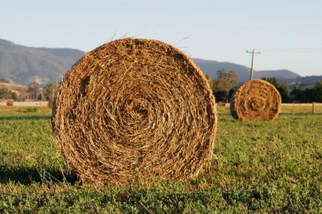 أسس وقواعد هامة في التغذية لدى الخيول