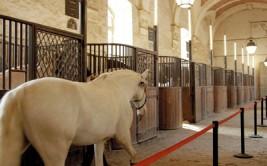 «أكاديميـة الفروسيـة» بمدينة فرساي الفرنسية.. فنـون تعـانق التاريخ