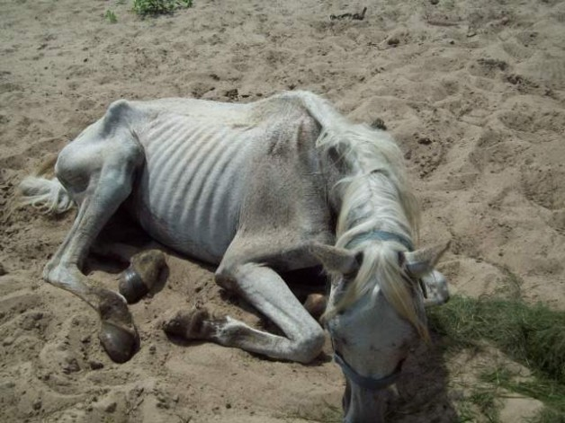 Authorities: horse starved to death